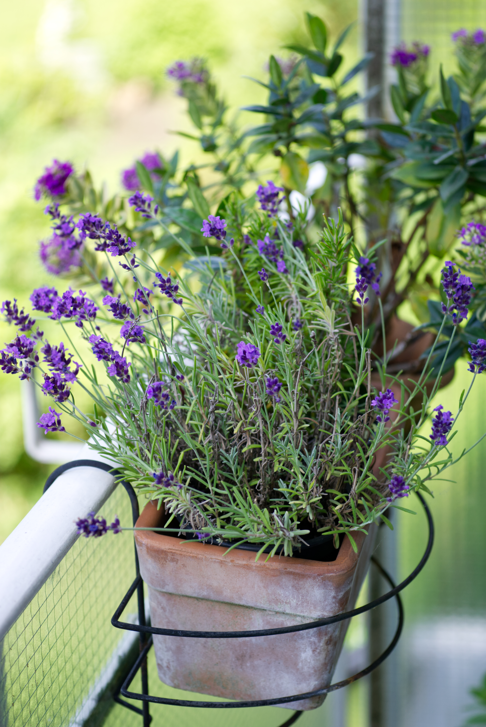 Kräutergarten auf dem Balkon