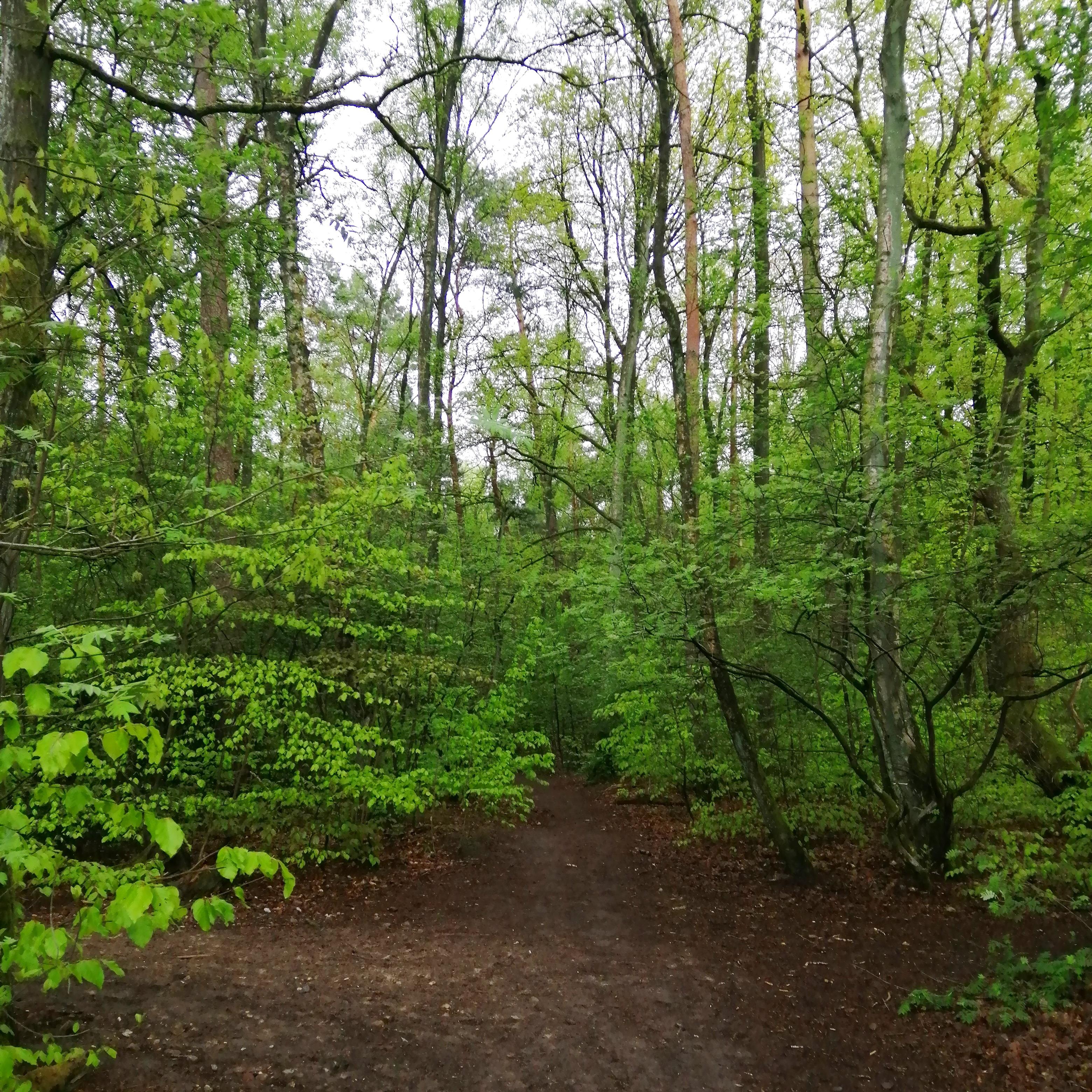 Waldspaziergang gesund